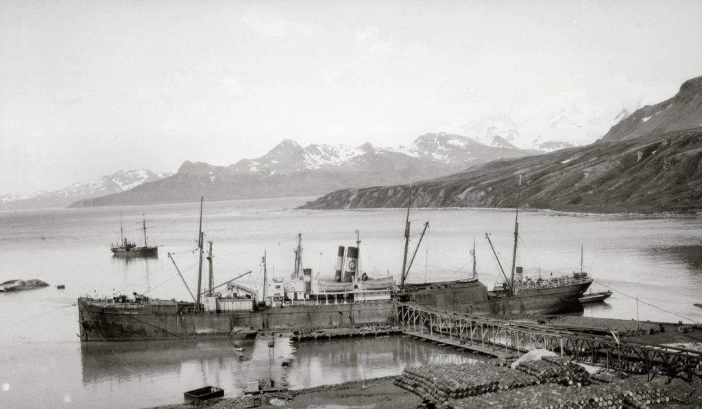 Professor Gruvel at Grytviken dock being loaded with whale oil with Quest set behind in the King Edward Cove Image ©SPRI